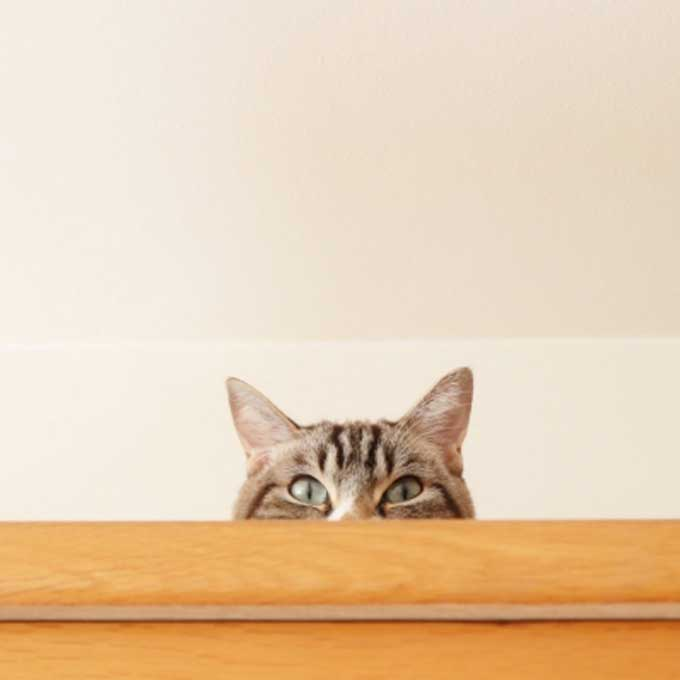 응석를 부리고 싶은데 방법을 모르는 고양이 유형 3