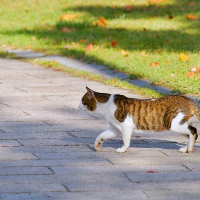 Q. 길고양이, 보호소에 데려갈 수 있을까? 없을까?