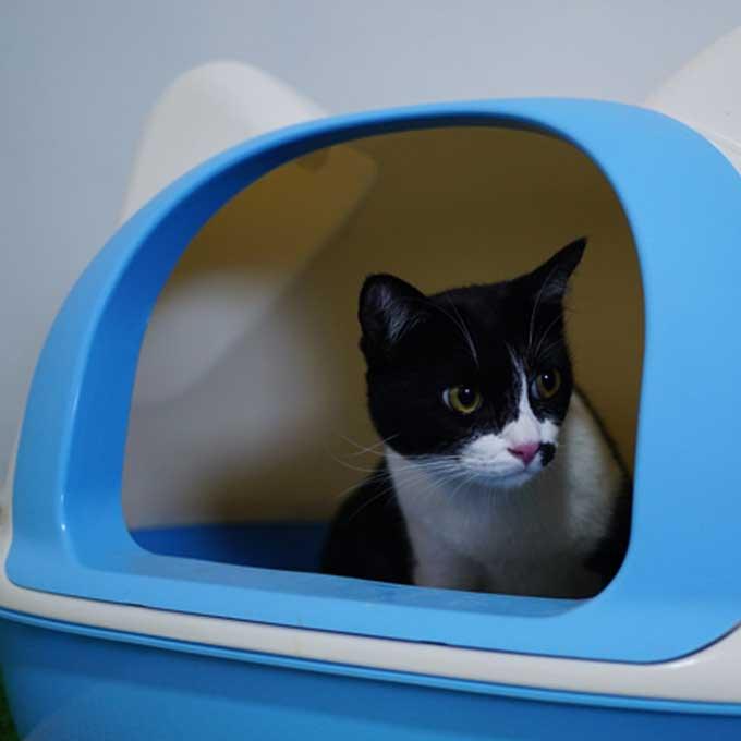 화장실 맘에 안 들수록 고양이는 한참 있다 나온다