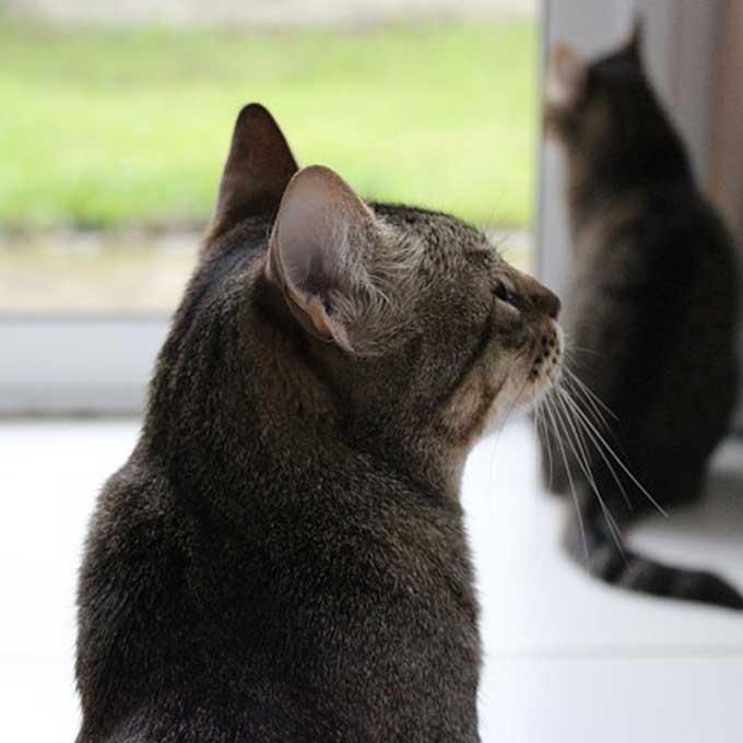 Q. 실은 대답했음, 고양이가 대답하지 않을 때 몸짓에서 읽는 마음