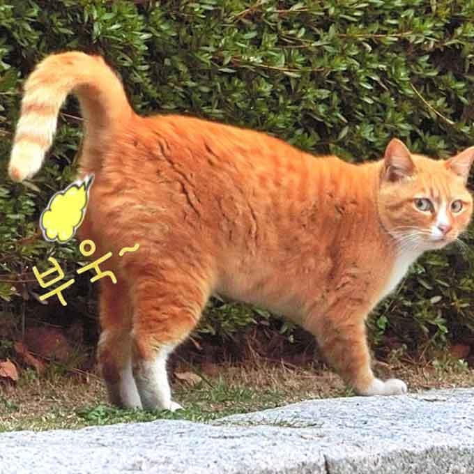 Q. 고양이도 방귀를 뀔까?