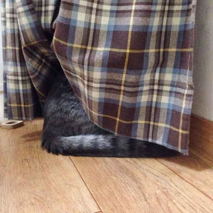 Q. 고양이가 숨어 있을 때 심리 3