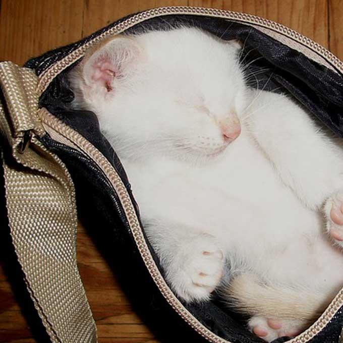 Q. 고양이가 집사 가방에 들어가는 심리는?