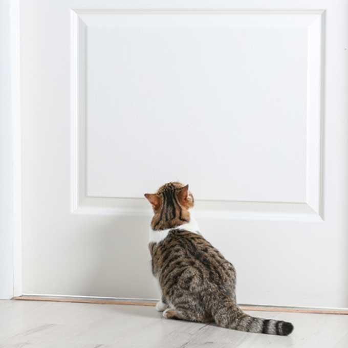 Q. 고양이를 가두면 절대 안 되는 이유 4
