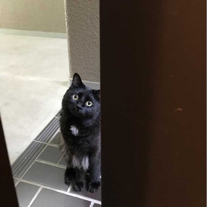 고양이가 외출하는 집사를 배웅할 때 마음 5