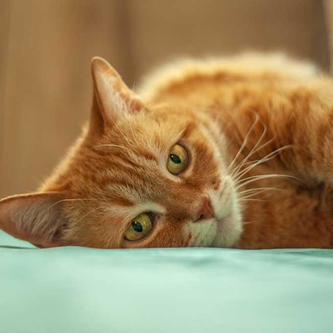 """Q. """"사는 게 힘들어서?"""" 고양이가 한숨 쉴 때 마음 4"""
