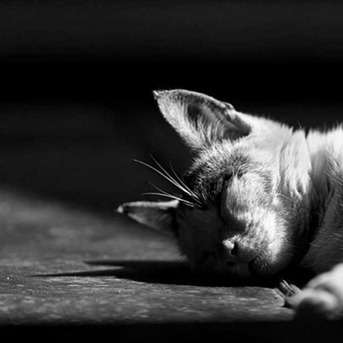 Q. 우리가 길고양이 사체를 볼 수 없는 이유