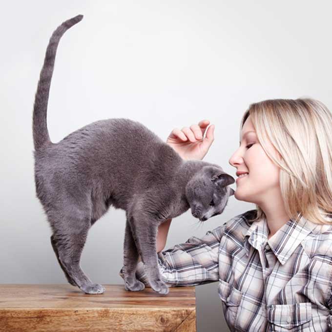 Q. 고양이가 집사를 존대할 때 하는 행동 4