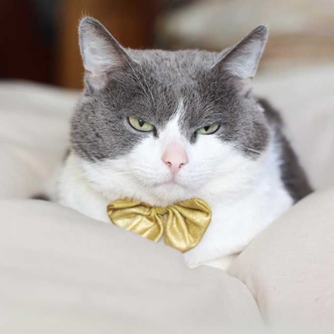 Q. 집사가 알아채기 쉬운 고양이 불만 신호 9