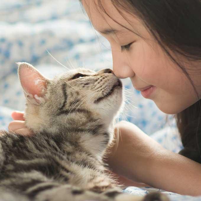 Q. 집사가 울 때 고양이가 곁에 있어주는 이유 4