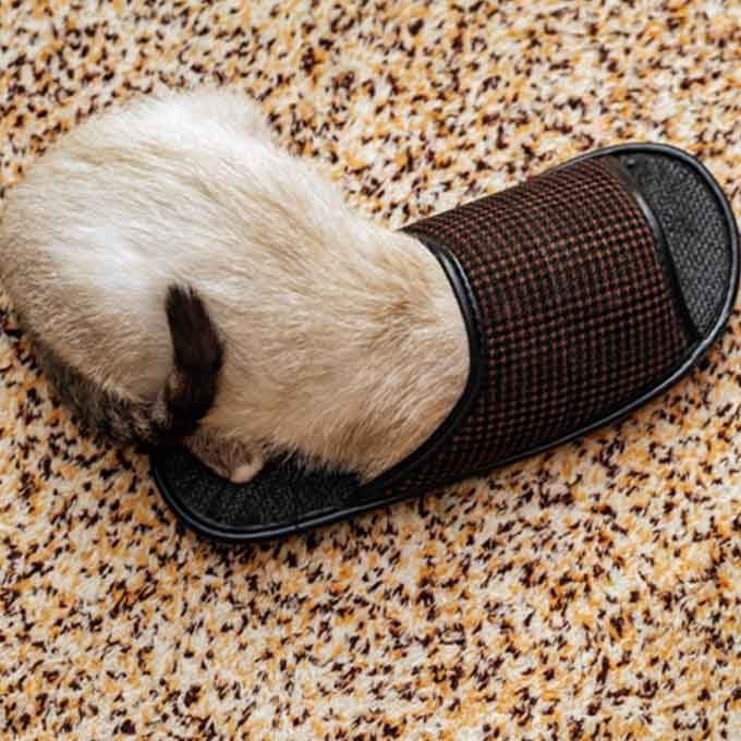 Q. 고양이가 집사의 슬리퍼를 좋아하는 이유 5