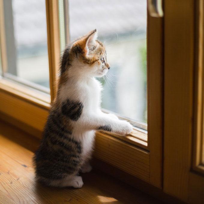 Q. 고양이가 창가를 좋아하는 이유 5