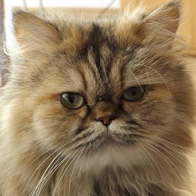 Q. 잘 우는 고양이가 있고 울지 않는 고양이가 있다?