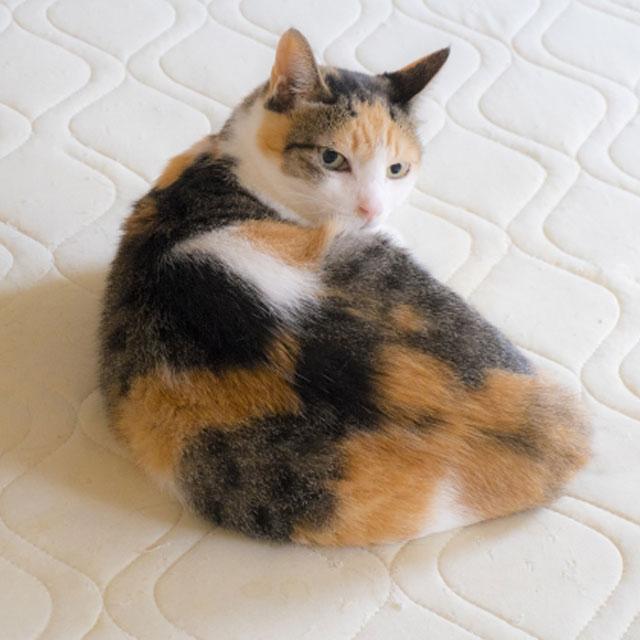 Q. 고양이가 집사에게 엉덩이를 갖다 대는 이유