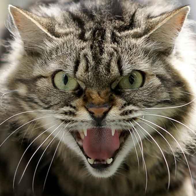 Q. 고양이가 격노했을 때 모습 5