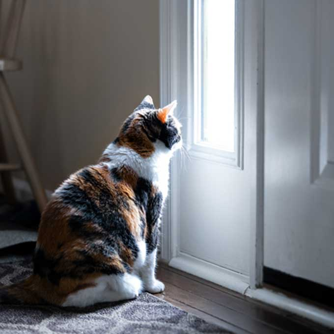 Q. 외출한 집사를 기다리는 고양이 심리는?