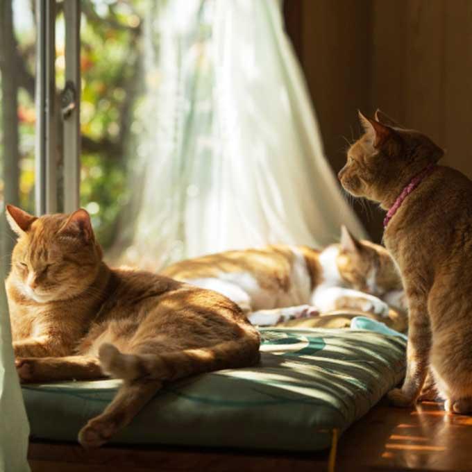 Q. 고양이가 고양이로서 행복을 느끼는 순간 6