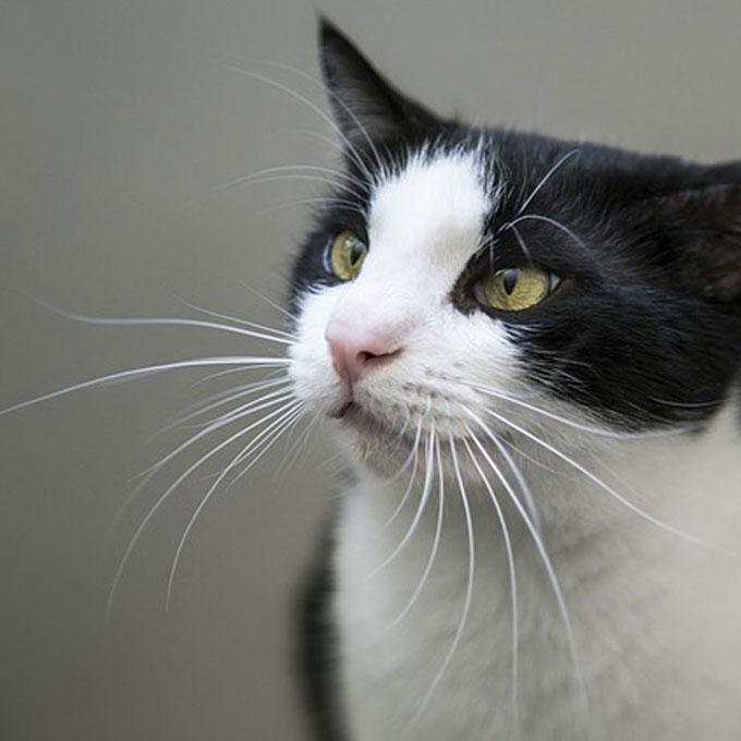 Q. 고양이 수염은 모두 몇 군데서 날까?