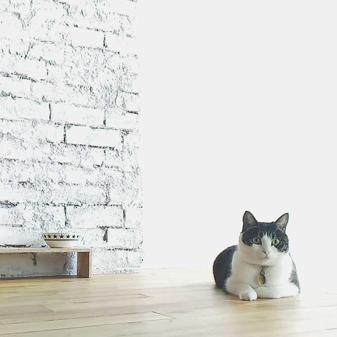 Q. 왜 고양이는 환경변화를 싫어할까?
