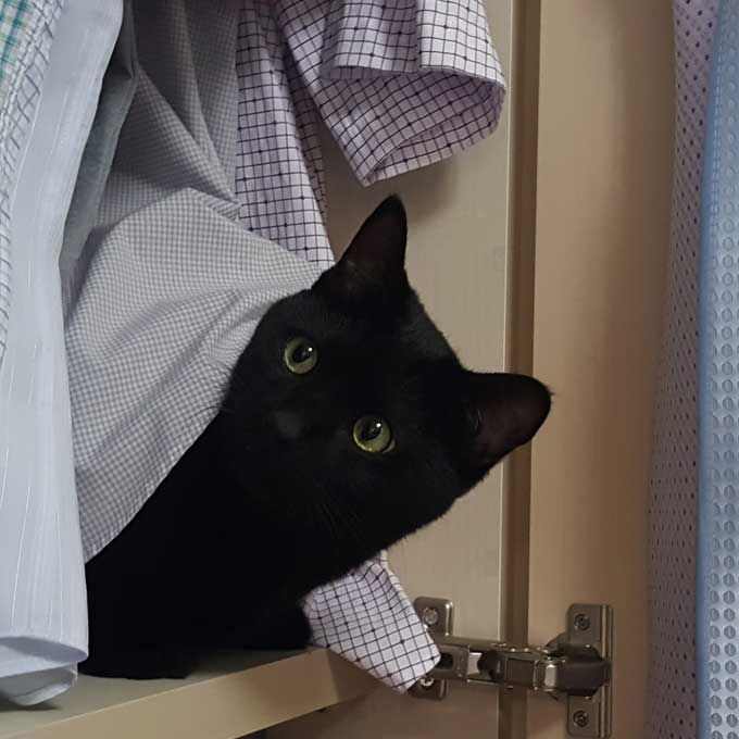 Q. 고양이가 옷장에 들어가 있는 심리 5