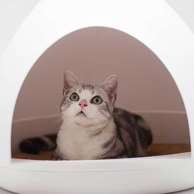 Q. 고양이가 화장실에 들어가 있는 이유 4