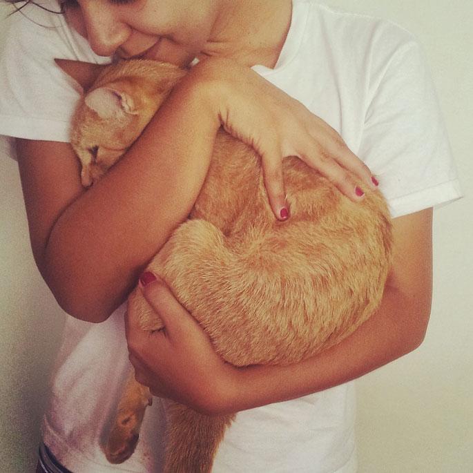Q. 고양이가 안기는 것을 좋아하게 하려면 어떻게 해야할까?