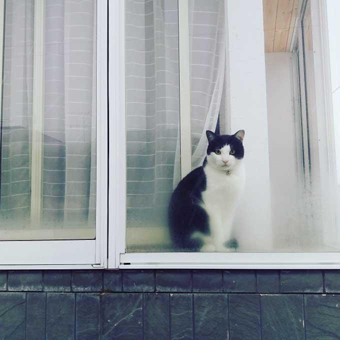 창밖을 바라보며 고양이가 하는 생각 5