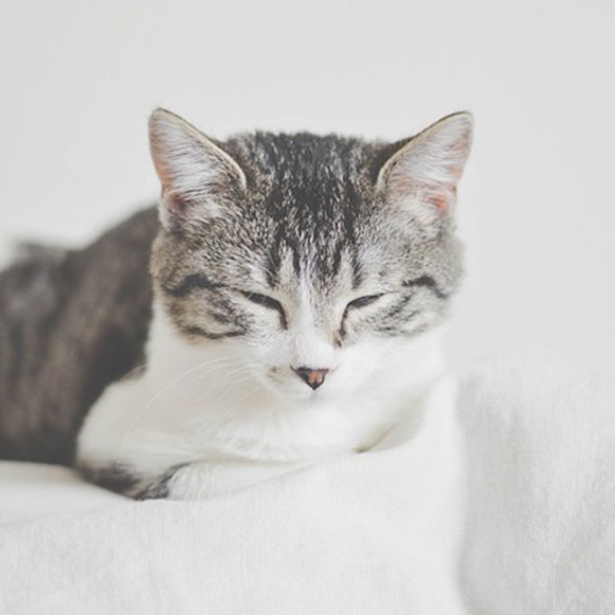 Q. 당신의 고양이가 식빵을 자주 굽는 이유는?
