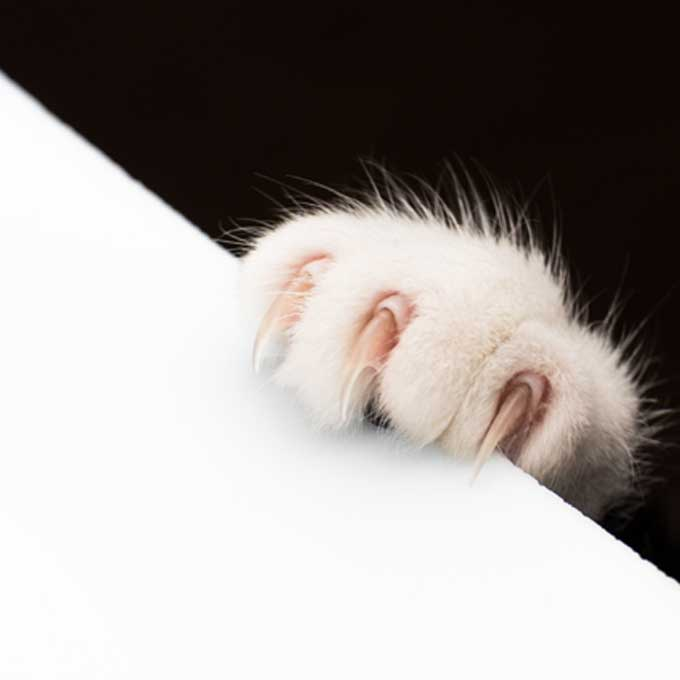 Q. 편안할 때도? 고양이가 발톱을 세우는 상황 5
