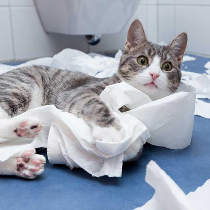 Q. 고양이가 화장지를 가지고 노는 이유 5