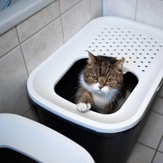 Q. 고양이가 볼일을 보고 덮지 않고 나올 때 마음 4