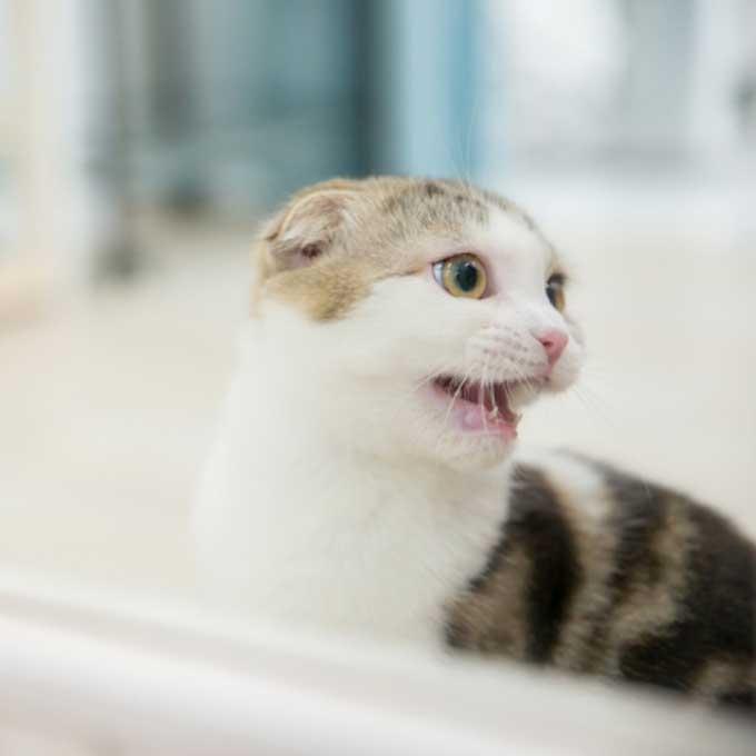Q. 고양이가 소리 없이 입만 달싹이며 울 때 마음