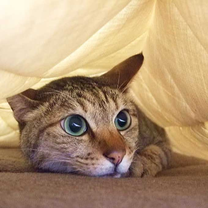 Q. 고양이가 집사와 함께 자고 싶어하는 이유