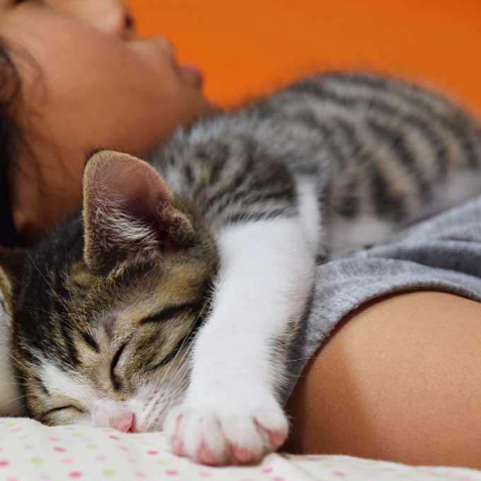 Q. 고양이가 집사 몸에 딱 붙어 잘 때 마음 3