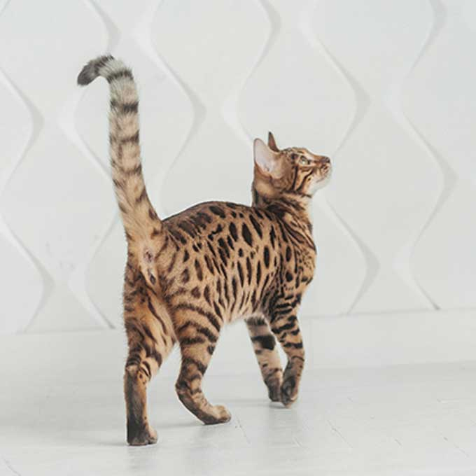 Q. 고양이가 꼬리를 바싹 세울 때 마음 4