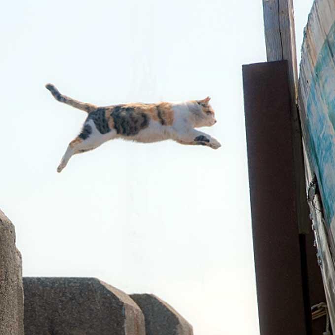 맨날 잠이나 자는 것 같아도..., 알수록 놀라운 고양이의 미친 신체 능력 4