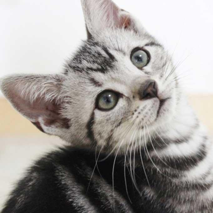 고양이가 집사를 그리워하는 순간 4