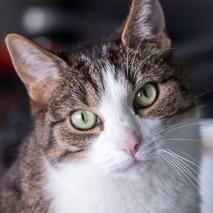 Q. 고양이 표정이 무뚝뚝한 이유