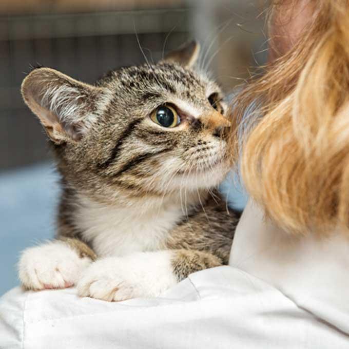 고양이가 집사 냄새를 적극적으로 맡는 상황 3