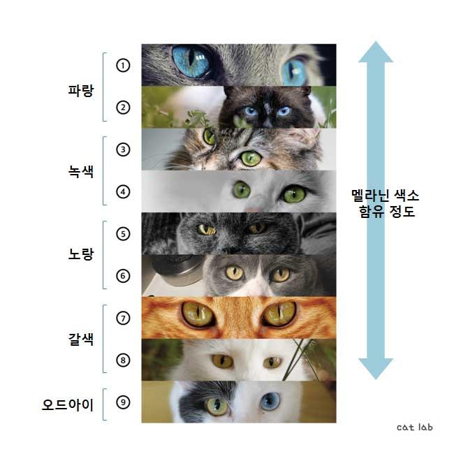 Q. 당신이 미처 알지 못했던 고양이 눈 색에 관한 것 5