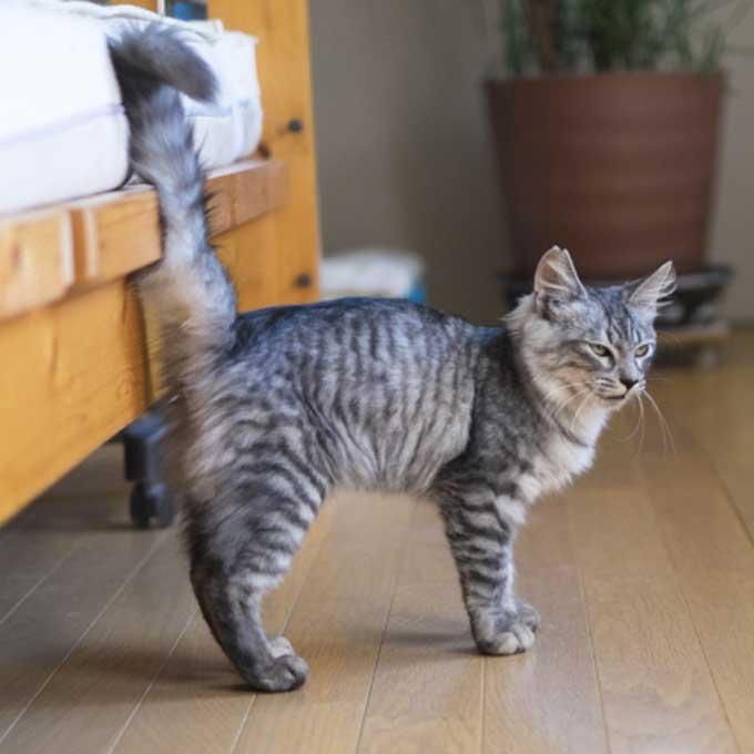 고양이가 꼬리 각도로 표현하는 감정 6