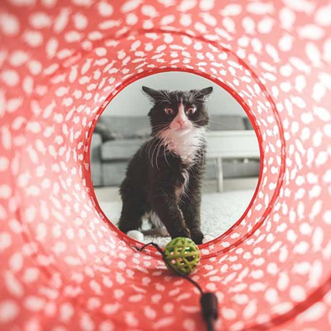 Q. 사냥놀이할 때 고양이가 시큰둥한 반응을 보이는 이유 3