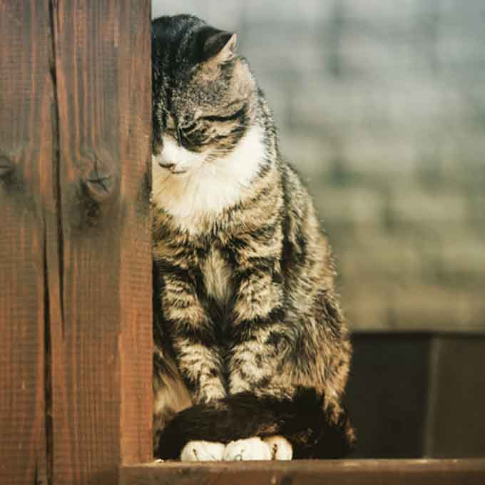 고양이가 슬플 때 하는 행동 5