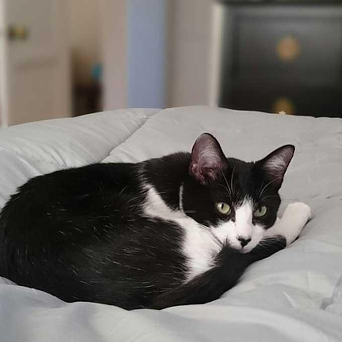 Q. 고양이가 좋아하는 장소 5곳과, 여기 있을 때 기분
