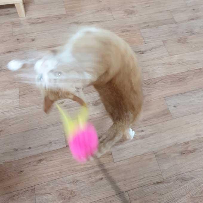 Q. 고양이가 놀다 바닥에서 미끄러지는 이유 3
