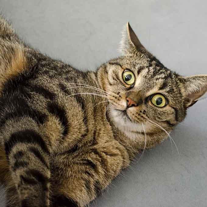 Q. 냥님은 다중인격? 고양이의 기분이 자주 바뀌는 까닭
