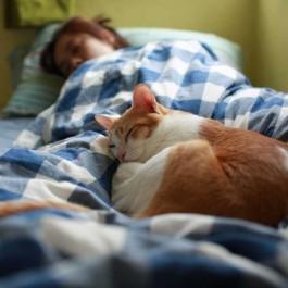 Q. 고양이가 잠자리를 자주 바꾸는 이유 3