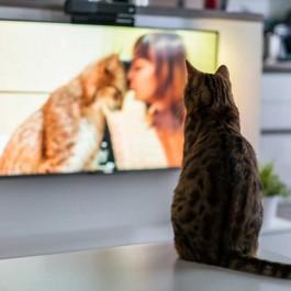Q. 집에 고양이가 혼자 있을 때 불이나 TV를 켜 둬야할까