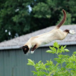 외계에서 오지 않았을까? 고양이의 위대한 신체능력 9