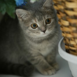 Q. 고양이가 귀엽게 보이는 과학적 이유 4